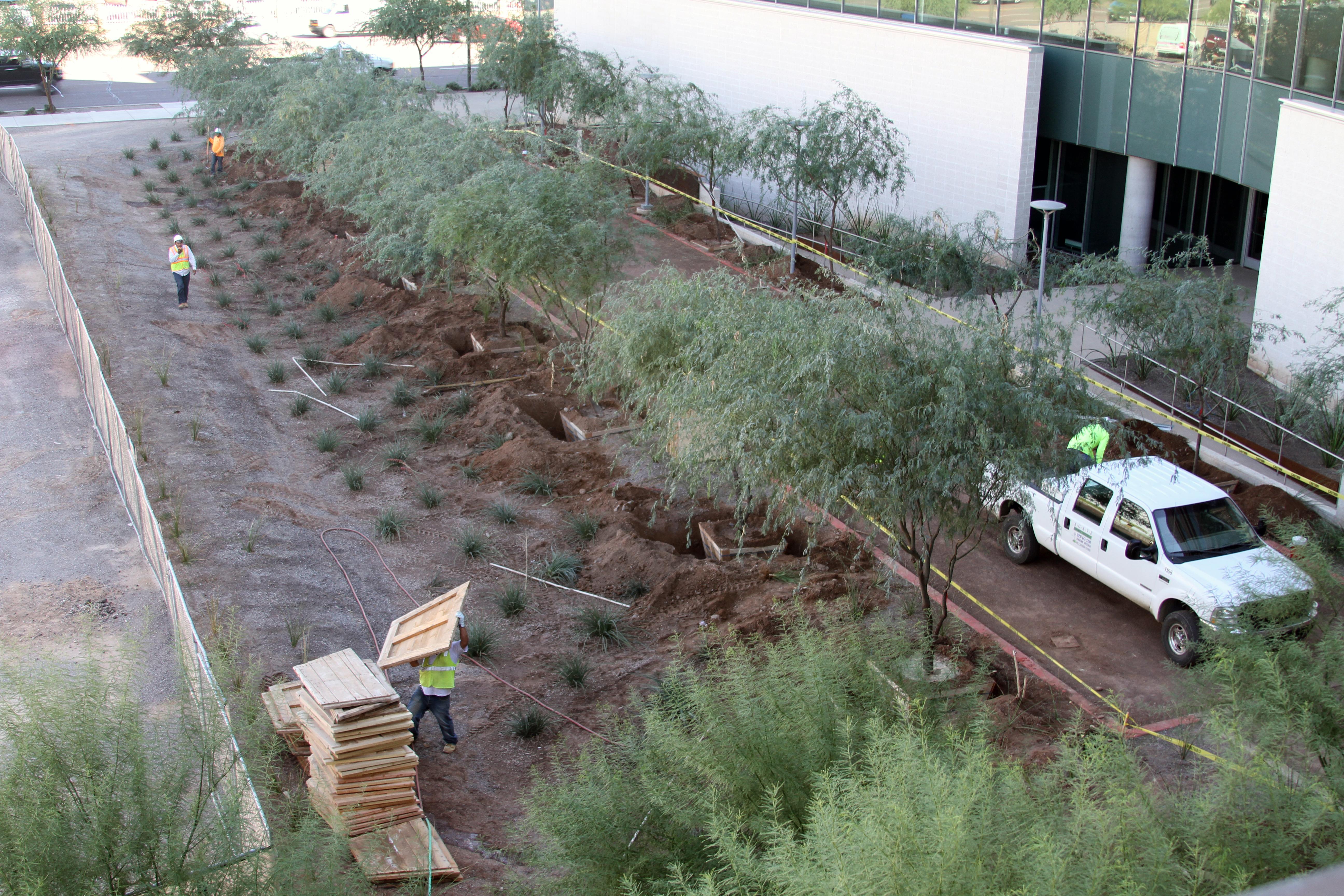 tree-salvage-2