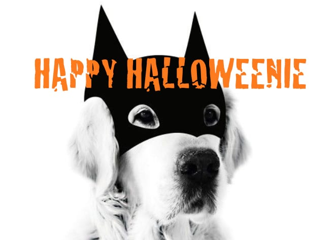 short-leash-halloween