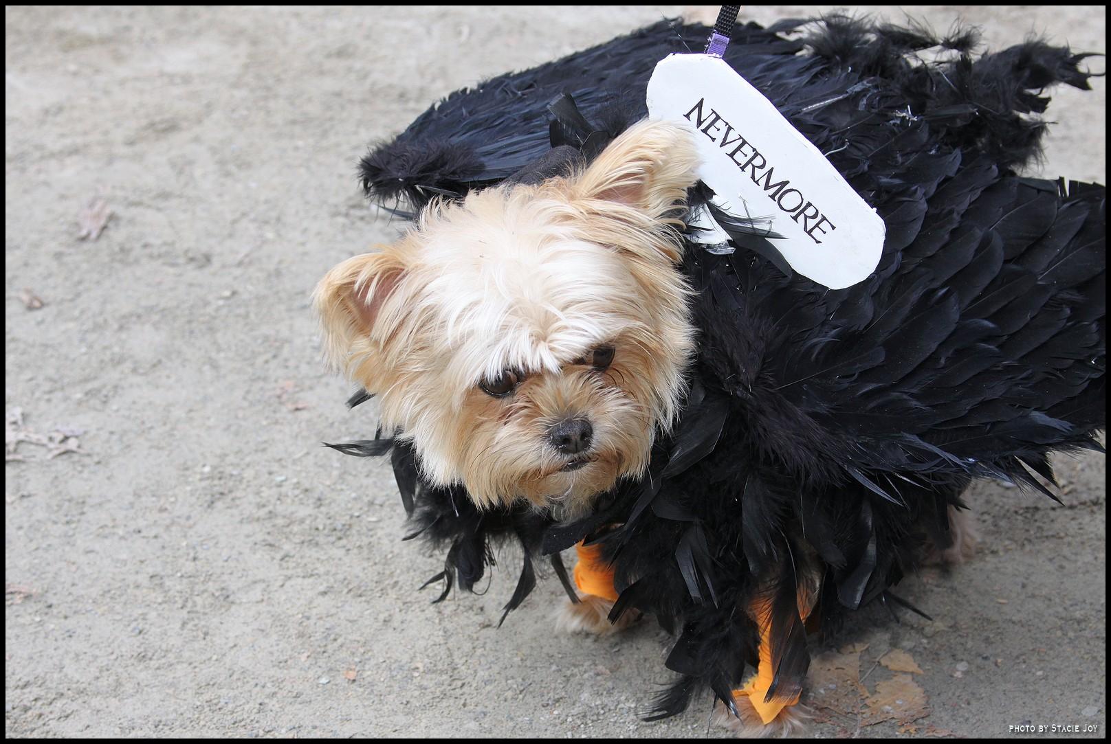 Dog Parade Phoenix
